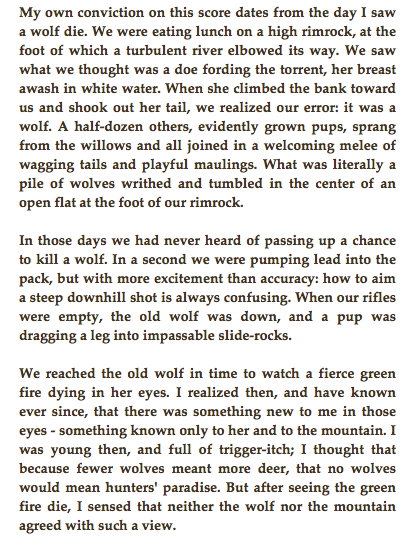 Aldo leopold mountain essay