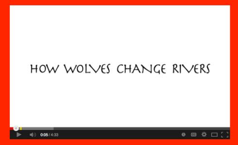 wolveschange