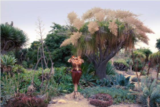 The Dracaena Dress installed in the desert section. To the far left is the Dracaena Draco tree from which the leaves were gathered.